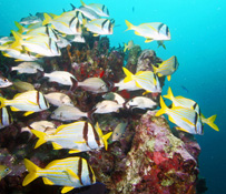 blog20 - Great Scuba Diving Awaits you in Akumal!